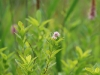 戦場ヶ原に咲く花