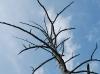 戦場ヶ原の立木