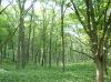 戦場ヶ原の森