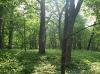戦場ヶ原の木漏れ日