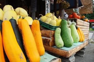 ズッキーニ、ユウガオ、そうめんうり、かぼちゃなどの夏野菜