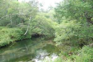 ゆったりとした湯川の流れ