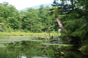 泉門池の立木の向こうに男体山
