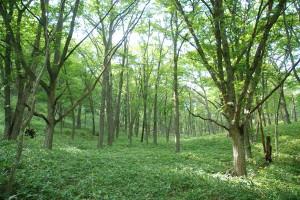 木漏れ日がステキな奥日光の森