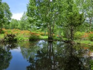 モリアオガエルが住む池